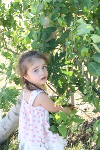 Red-handed, picking limes...