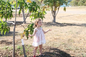 """Mangoes, where are you,"" she said after inspecting a barren tree."